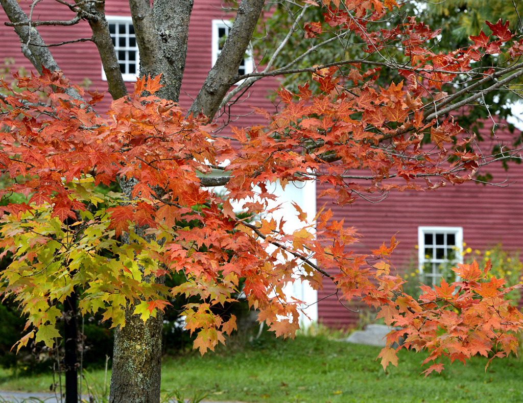 Autumn color nearing its peak in southern maine portland for Charlie s motor mall augusta maine