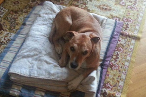 Officials in Madrid, Spain,  got a court order to euthanize Excalibur, a dog that was the pet of a Spanish nursing assistant with Ebola, because of the chance the animal might spread the disease.