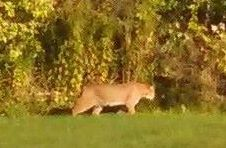 A Scarborough woman took a photograph of this animal wandering through her backyard on Sept. 26.