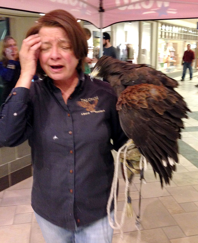Lorrie Schumacher of Talons! A Bird of Prey Experience secures her Harris's hawk after it was attacked by another of her birds, European eagle owl, during a demonstration at the University Mall in Burlington, Vt., Friday. The bird were on display as part of a new L.L. Bean store opening.