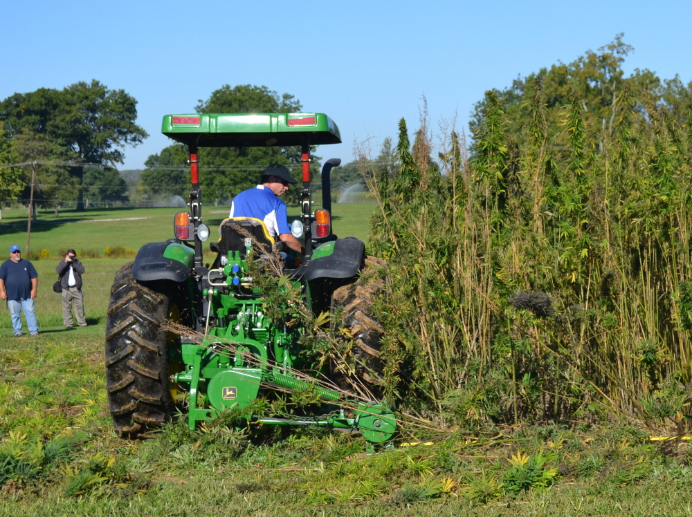 A tractor cuts hemp at a University of Kentucky research plot. A national effort seeks to end the long-standing federal prohibition on most hemp production by changing state policies.