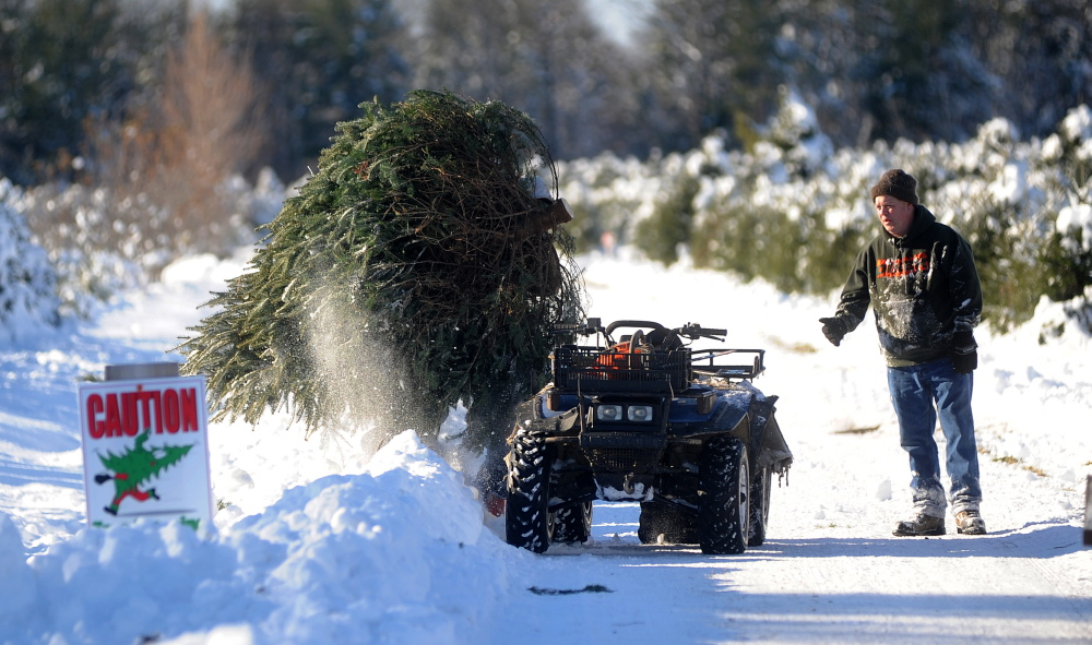 Jared Waraskevich loads a balsam fir onto a waiting four-wheeler as Mark Bellaire, right, watches on Saturday at Trees to Please in Norridgewock. The Bellaire family, of Clinton, visits a different tree farm each year in pursuit of the perfect family tree.