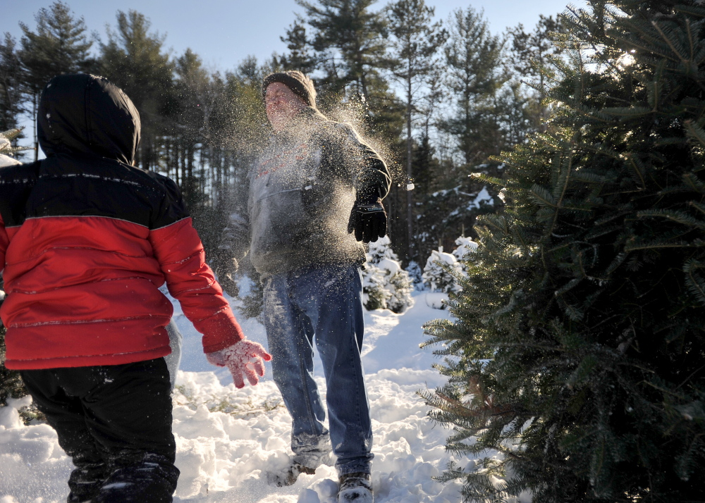 Jacob Bellaire, 8, pelts his father, Mark, with a snowball while hunting for the family Christmas tree Saturday at Trees to Please in Norridgewock.