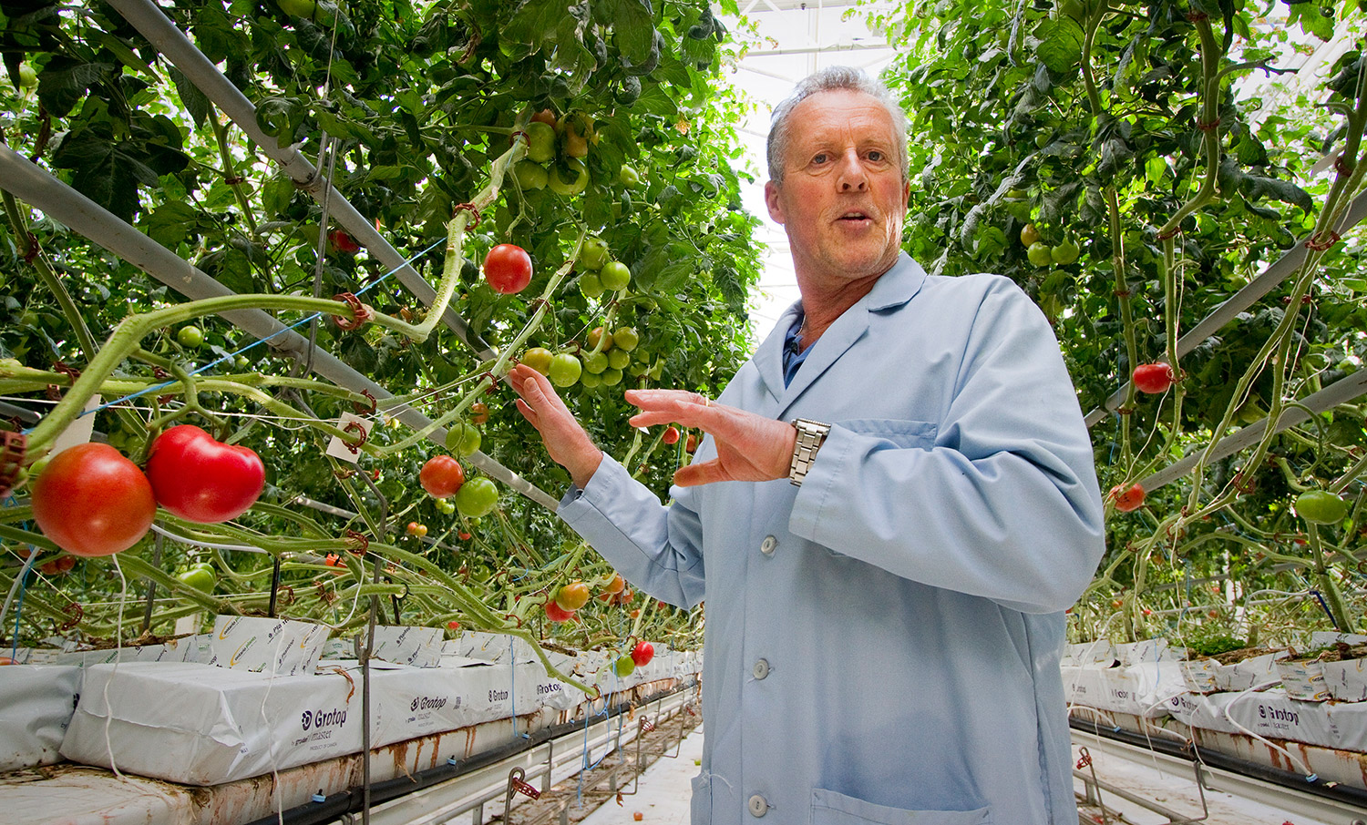 vine ripened tomatoes at backyard farms in madison press herald