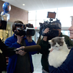 Patsy Murphy, executive director of the Animal Refuge League of Greater Portland, returns Spice the kitten to Albuquerque, New Mexico. Murphy accompanied the kitten on a flight from Maine on Thursday.
