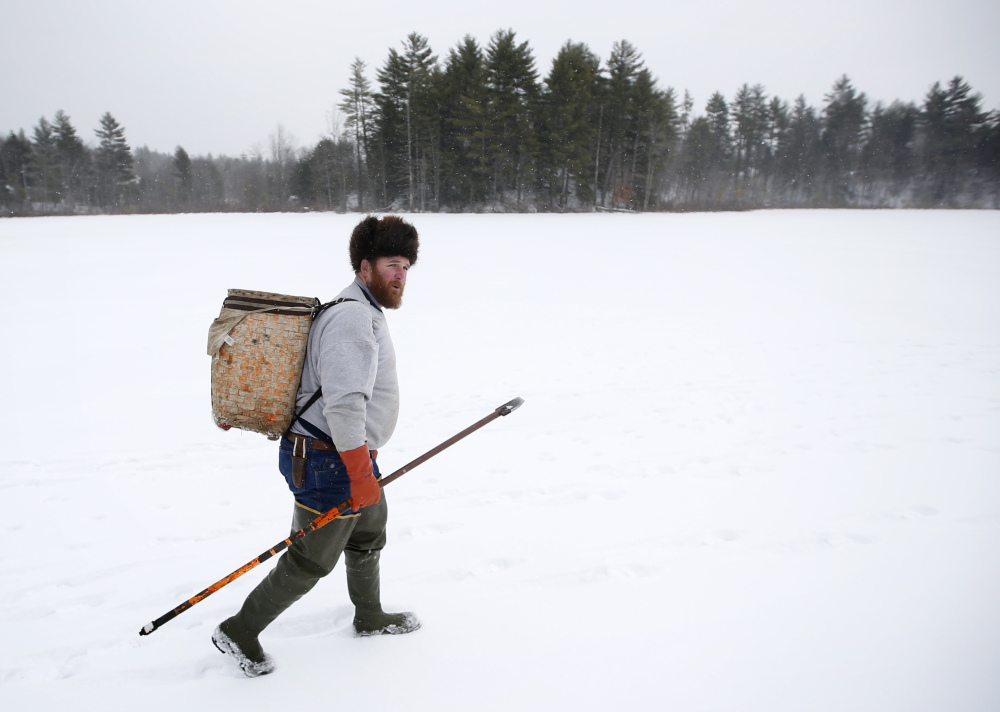 Trapper Brian Cogill walks on a frozen pond while checking his traps in Limington. Cogill is one a shrinking number of trappers.