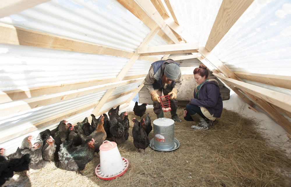 Dustin Colbry and his wife, Natasha, remove eggs from the henhouse at Spruce Mill Farm in Dover-Foxcroft on Tuesday.