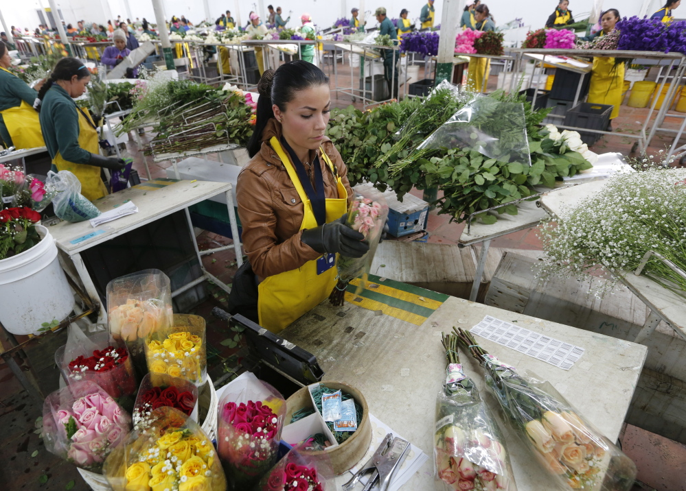 Workers for a Colombian flower grower organize bouquets ahead of Valentine's Day in the town of Subachoque. Colombia is the world's second-largest flower exporter behind the Netherlands. The Andean country exports about 500 million flowers to the U.S. for Valentine's Day, according to the Colombia Flower Growers Association.