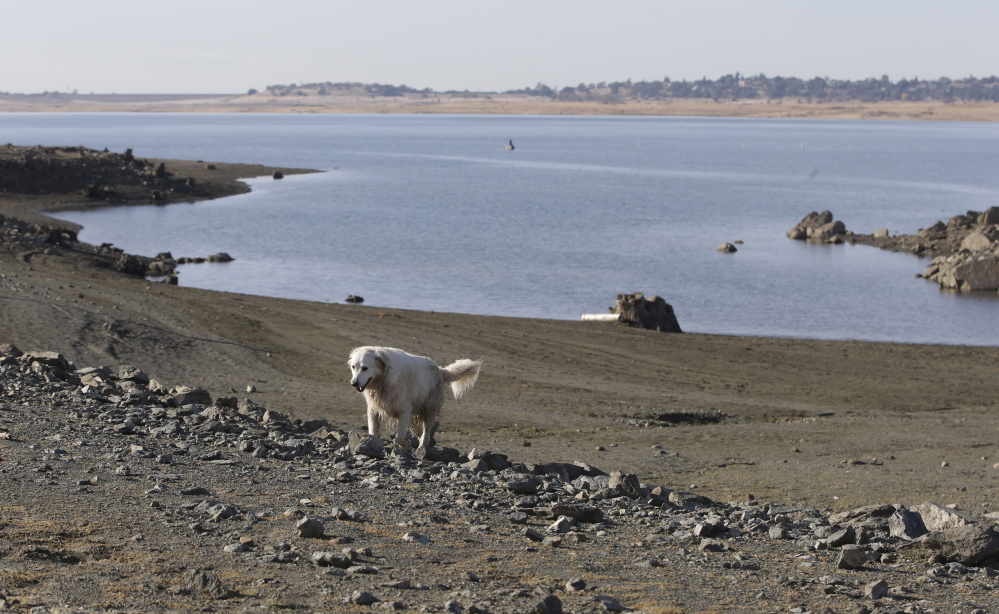 A dog walks along the receding shoreline of drought-stricken Folsom Lake near Folsom, Calif., in November. Storms in early December boosted water supplies enough to provide Southern California cities and farms 15 percent of their requested water, the Department of Water Resources announced last month.