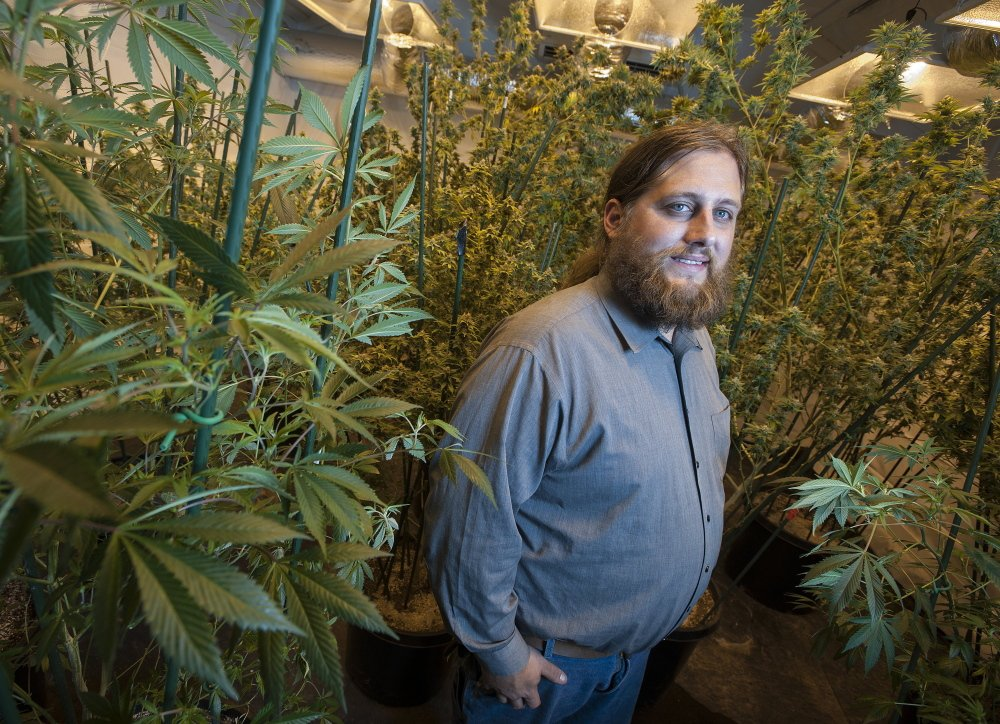 Paul McCarrier poses with part of his medical marijuana growing operation on Wednesday.   Kevin Bennett Photo
