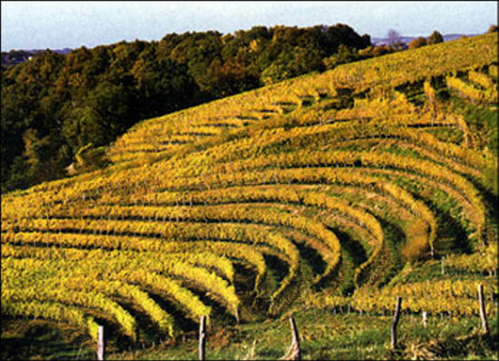 Many Jurançon vineyards are terraced, and their location in the foothills of the Pyrénées mountains accounts for the potent mineral nature of the wines. Courtesy photo