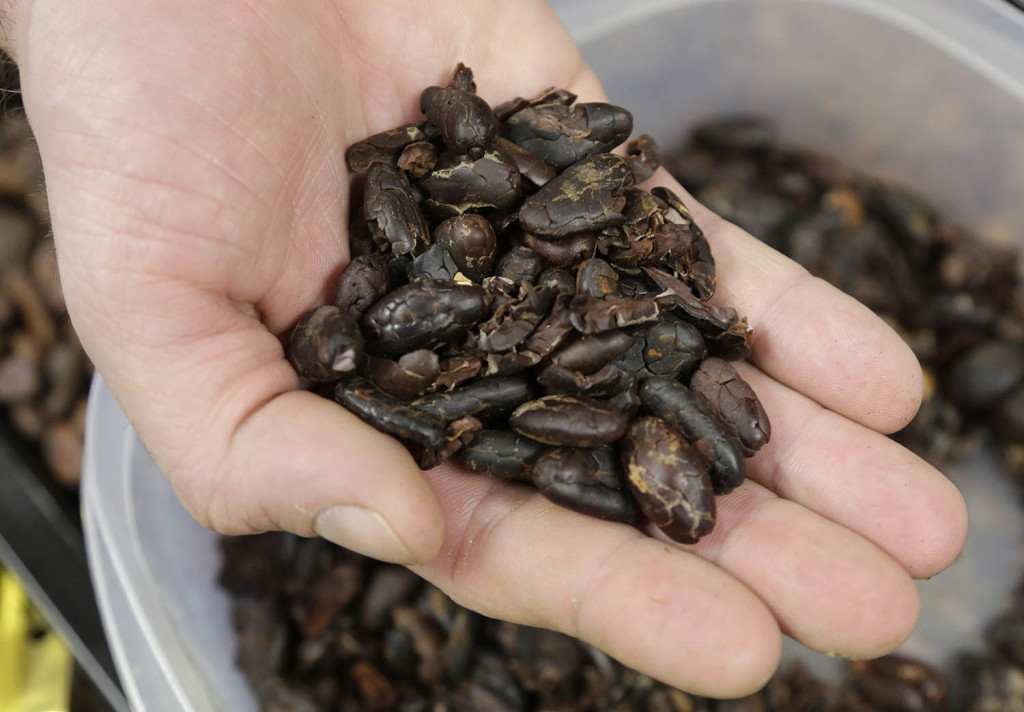 Cocoa beans that are grown in Nigeria, where leaded gasoline is used, could be the source of high levels of heavy metals in some chocolate products, according to one scientist.