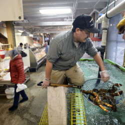 Abraham Turcotte of Portland's Harbor Fish Market plucks lobsters out of the tank Thursday. Lobster continues to dominate Maine's commercial fishing industry, bringing in $457 million in 2014, according to preliminary data from the state. This year, unusually cold water is expected to delay the start of the lobstering season by a couple of weeks, according to a forecast from the Gulf of Maine Research Institute. Shawn Patrick Ouellette/Staff Photographer