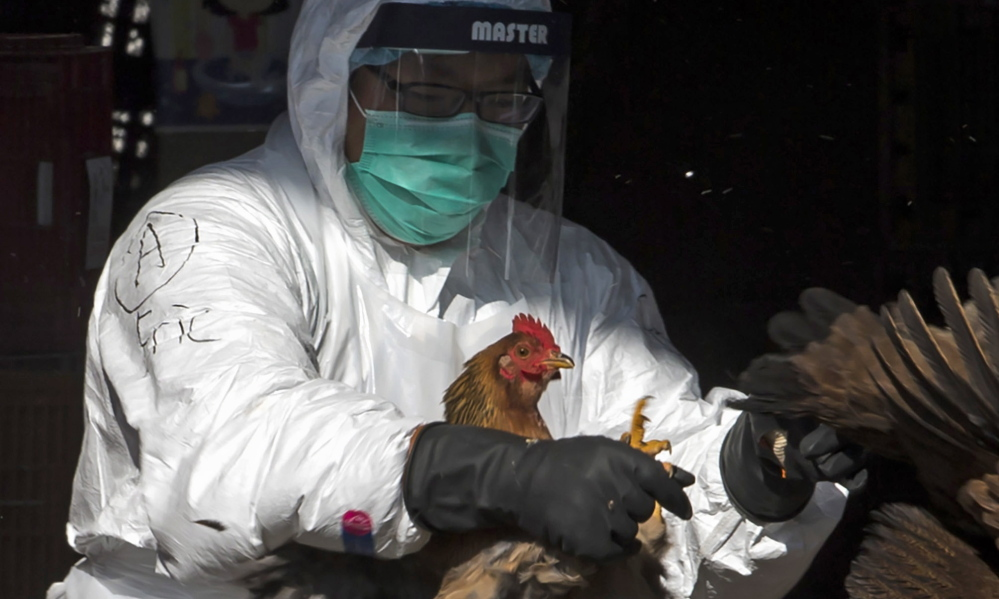 A health worker culls a chicken at a market in Hong Kong in 2014.