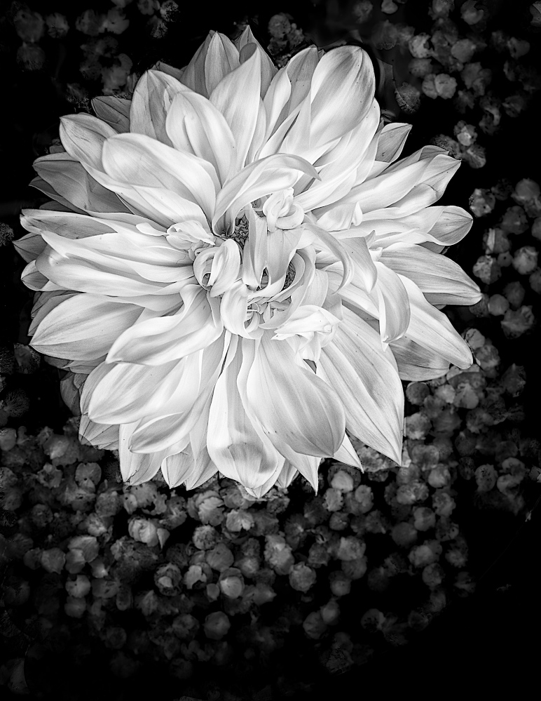 "A white dahlia accompanies an 1859 quote by Margaret J.M. Sweat: ""I must recall my childhood and its externalities; I must paint the portrait of the little child, that you may better comprehend the woman; and show you the bud in which so many embryo leaves lay folded and almost invisible, that you may recognize the flower when it blooms into the fullness of glowing, panting, luxuriant life."""