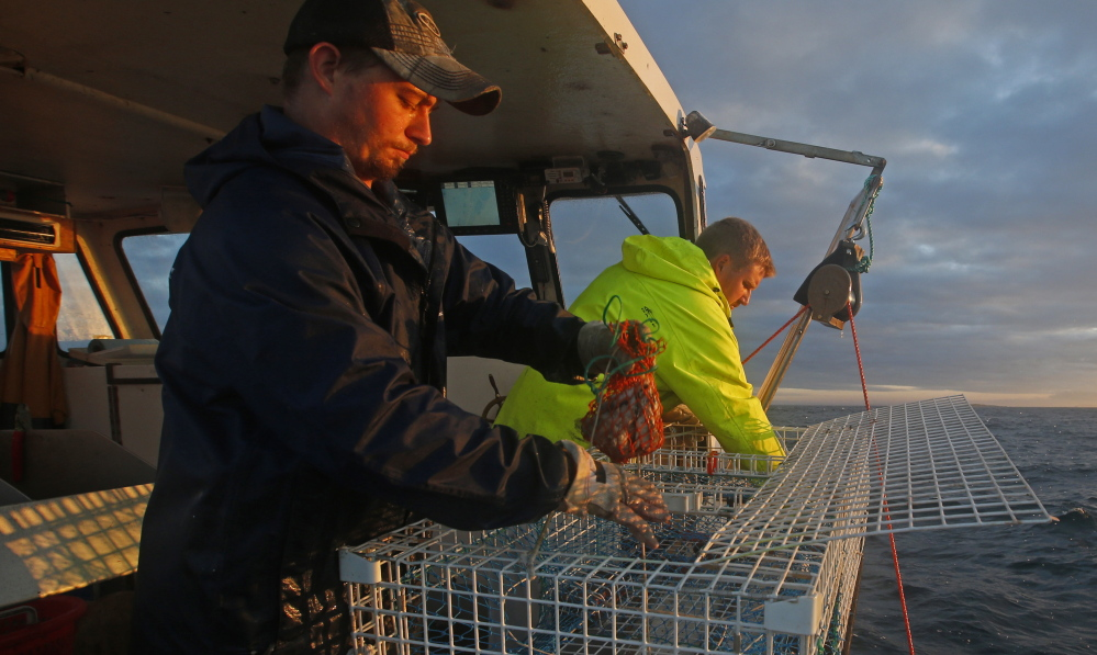 Sternman Brandon Demmons, left, places a bait bag full of herring in a lobster trap off Monhegan Island in July 2014. Herring live in massive schools that can number in the billions, serving as food for marine species ranging from cod to whales.