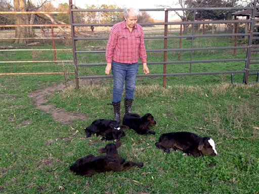 Dora Rumsey-Barling among four newborn calves born on March 16, 2015, ostensibly to the same cow. DNA tests will be done to satisfy those who question the veracity of the calves'' births from one mother, the odds of which were 1 in 11 million.