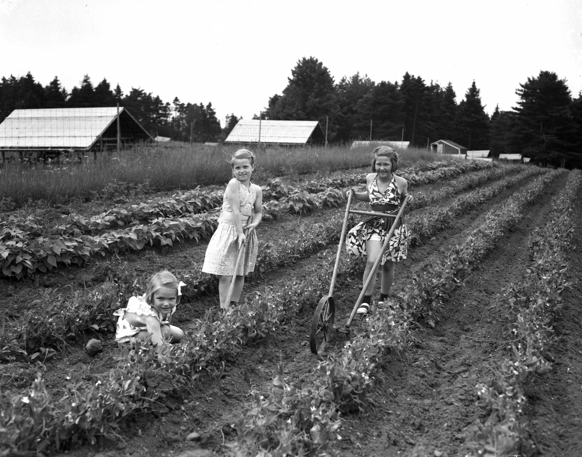 Flashback: July 5, 1942 Maine Sunday Telegram photo of Victory Gardeners