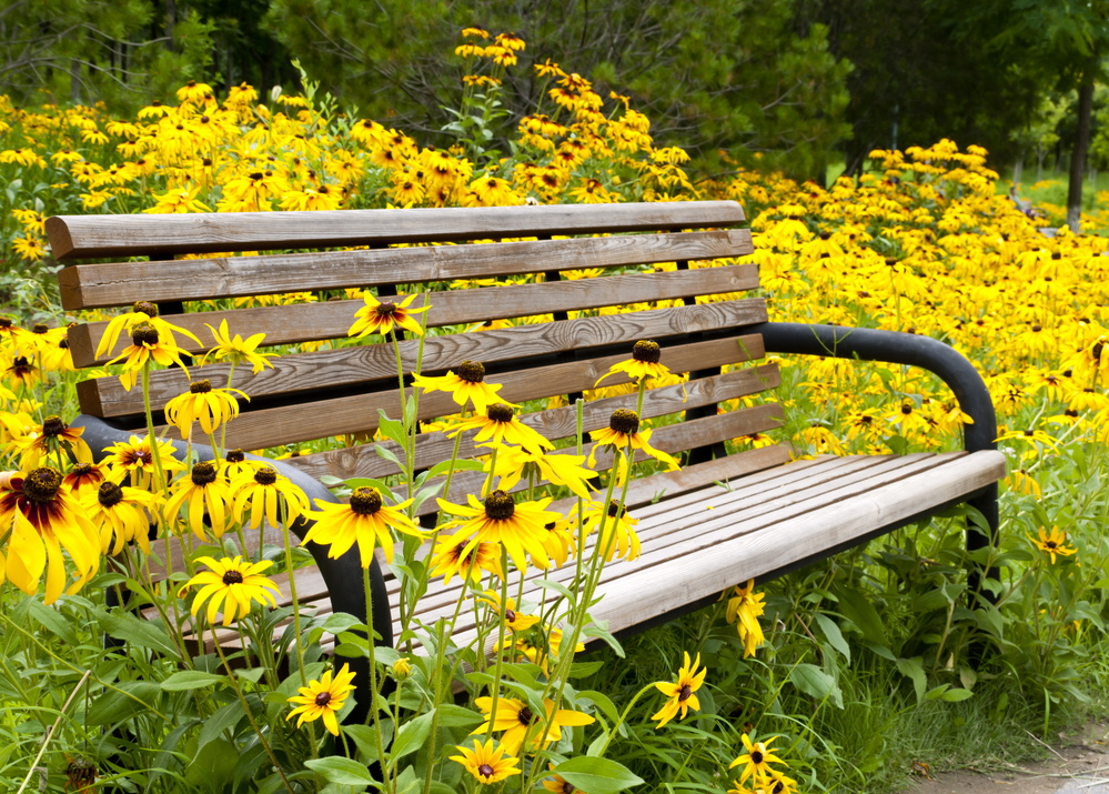 It's a great time of year to plant perennials like black-eyed Susans.