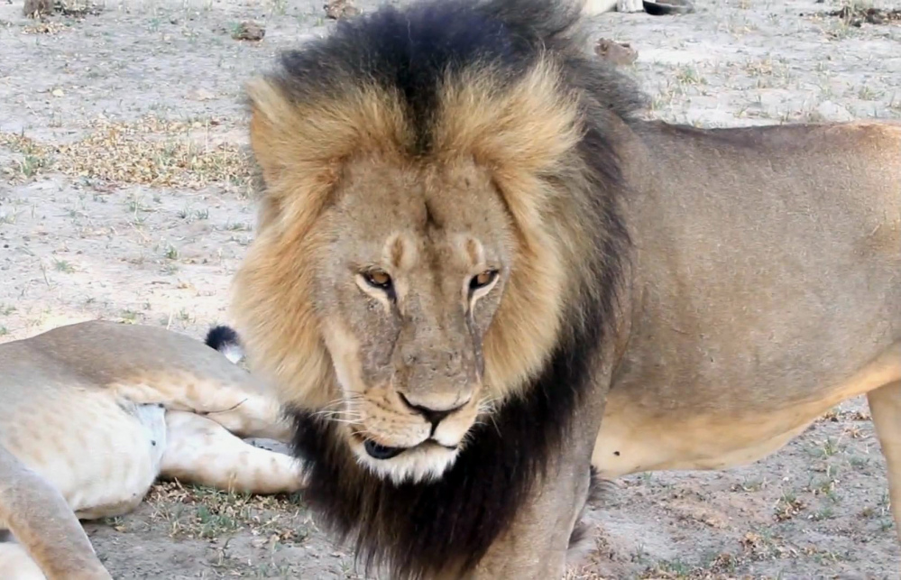 The death of Cecil the lion last year in Zimbabwe sparked a law in New Jersey that bans the importation of big-game trophies.