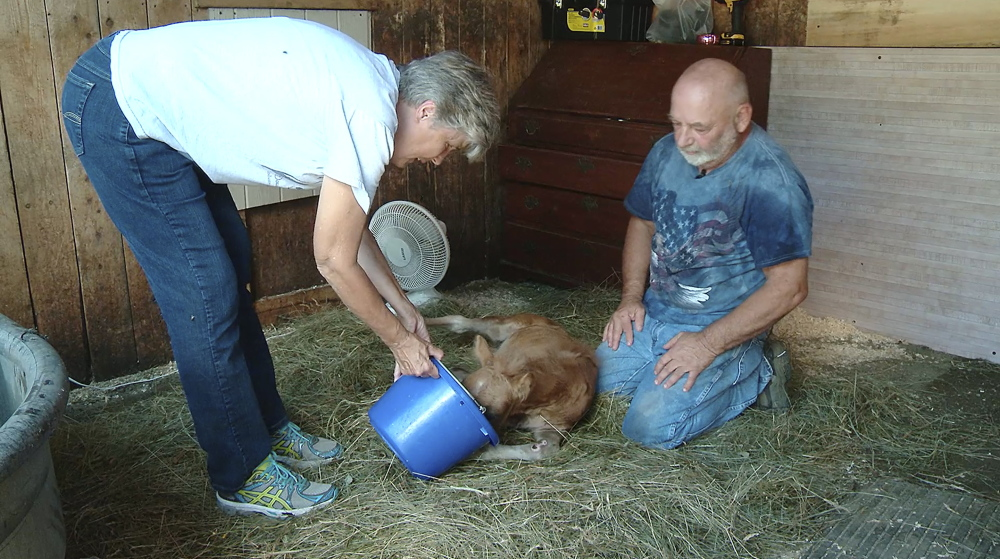 Brenda and Lennie Green, owners of Double B Equine Rescue in Industry, feed 8-week-old Angel on July 22.