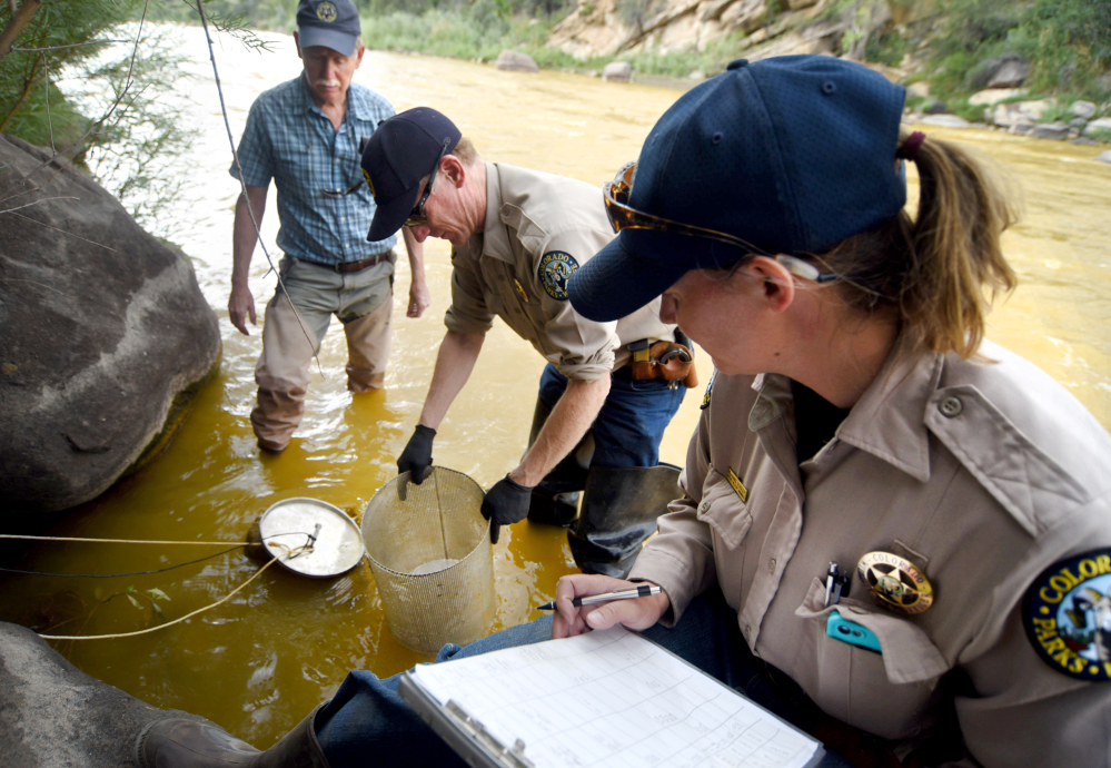 Stephanie Schuler, right, and Steve McClung, center, of Colorado Parks & Wildlife, and Mike Japhet, a retired aquatic biologist working with CP&W, check on cages with rainbow trout fingerlings on Friday on the Animas River. The Associated Press