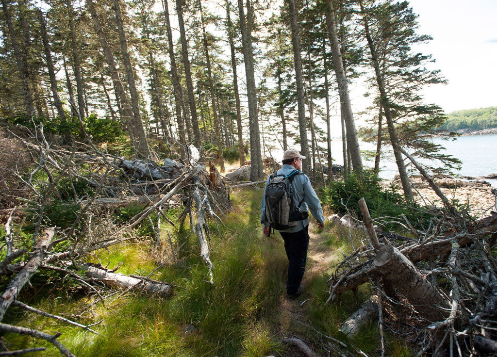 Frenchboro Preserve steward Terry Towne hikes through a section of fallen trees near Northeast Point on the Maine Coast Heritage Trust's Frenchboro Preserve. The MCHT is planning two rural camp sites on the preserve.
