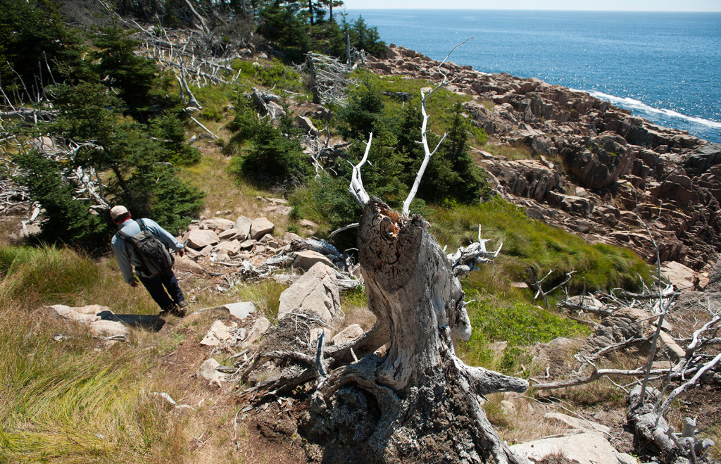 Towne traverses a steep section of trail on the Maine Coast Heritage Trust's Frenchboro Preserve.