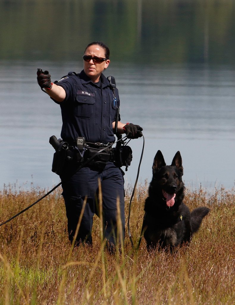 Officer Michelle Cole and a police dog search along Back Cove on Thursday, investigating a reported rape along the trail Wednesday afternoon. Joel Page/Staff Photographer