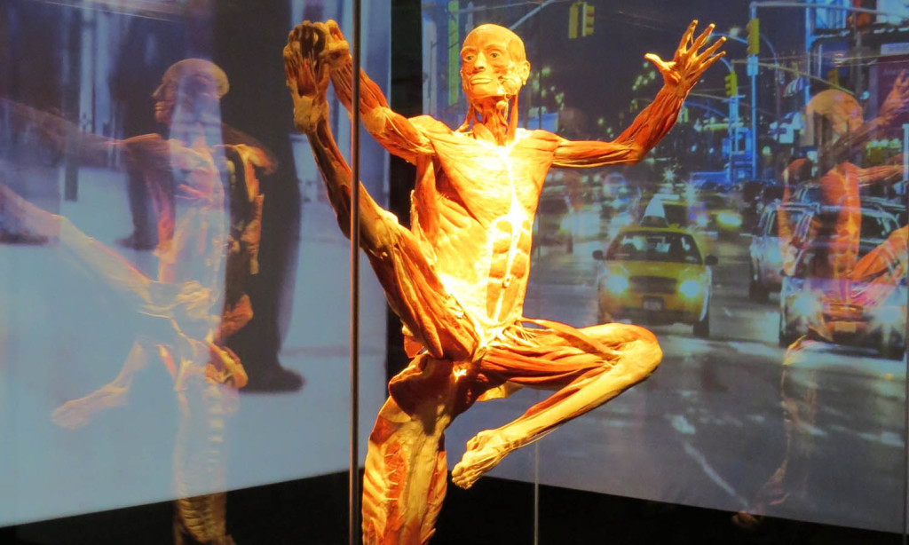 BODY WORLDS. Pulse Impression. Copyright: Gunther von Hagens' BODY WORLDS, Institute for Plastination, Heidelberg, Germany, www.bodyworlds.com