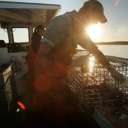 Cory McDonald removes a bait bag from a lobster trap while fishing off the coast of Stonington in 2015. The Department of Marine Resources says fee increases starting in 2018 would enable it to hire an additional lobster biologist.