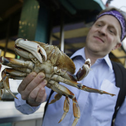 Michael Bair, of Lexington, Kentucky, holds an imported Dungeness crab from the Northwest at Fisherman's Wharf in San Francisco.