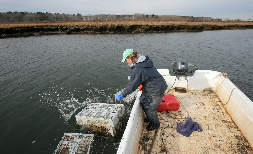 Abigail Carroll drops a bin of oysters back into the water in Scarborough. After injuring her back, Carroll enlisted the help of a physical therapist to find methods of working her oyster farm that would cause less stress to her back.