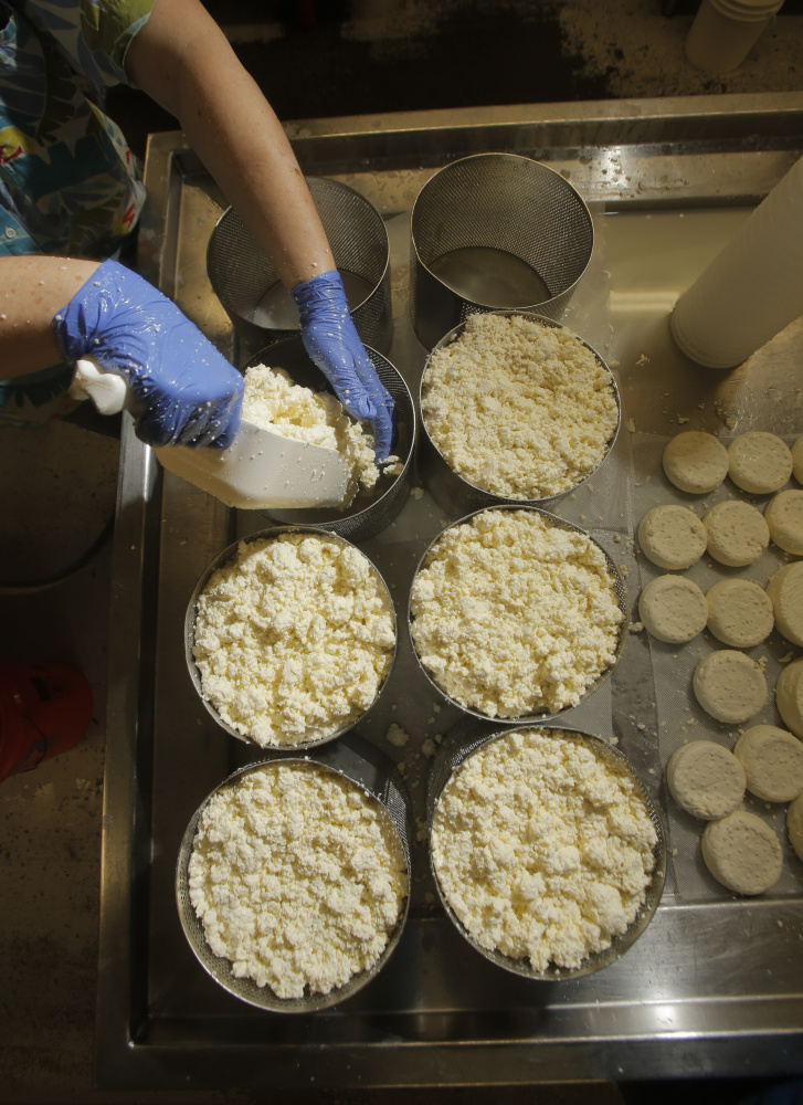 Lakin puts curds into round molds. Opus 42 is a semi-firm cheese with a natural rind that is aged for three months.