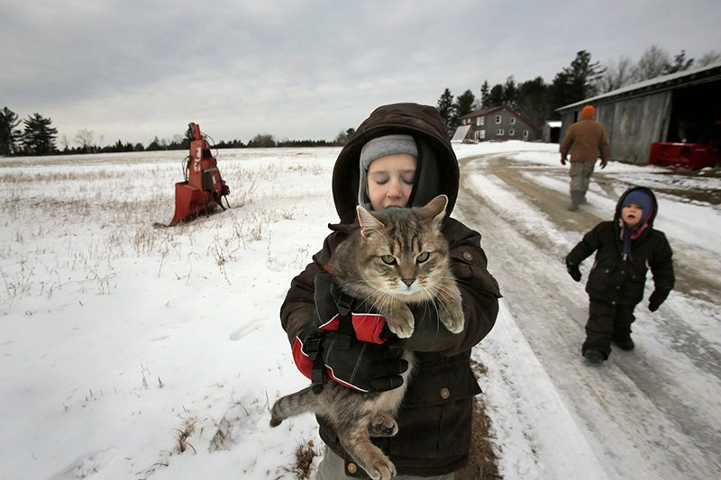 On his way to a winter greenhouse, Gus Schultz, 5, carries one of the family cats down the driveway at King Hill Farm in Penobscot.