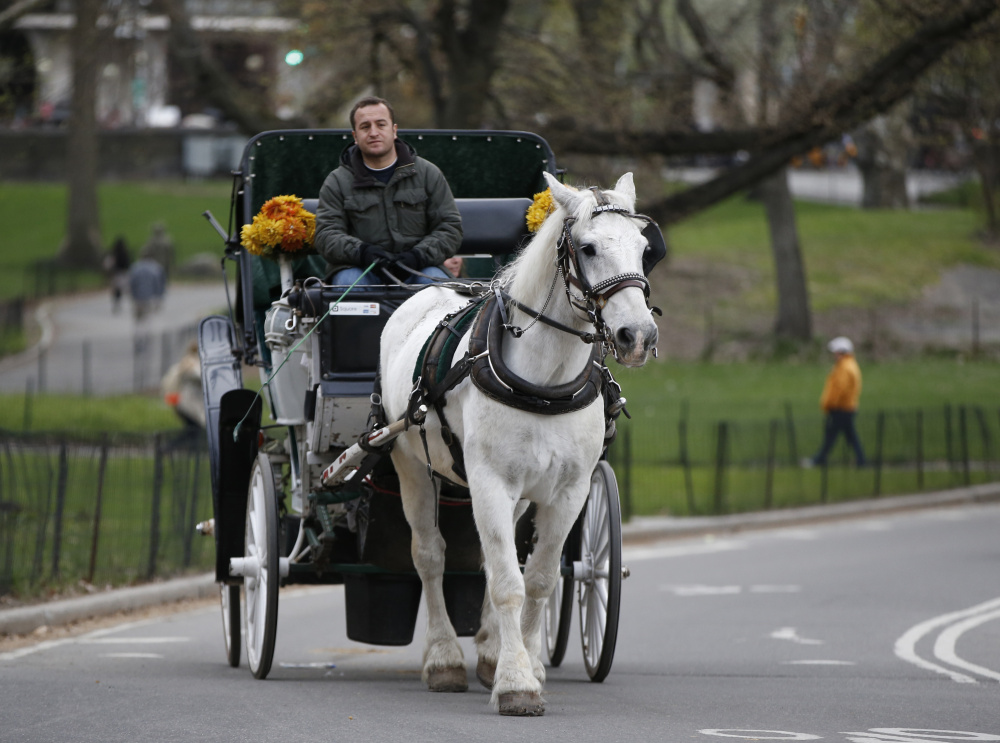 A horse-drawn carriage driver takes passengers for a ride around Central Park in New York.  The Associated Press