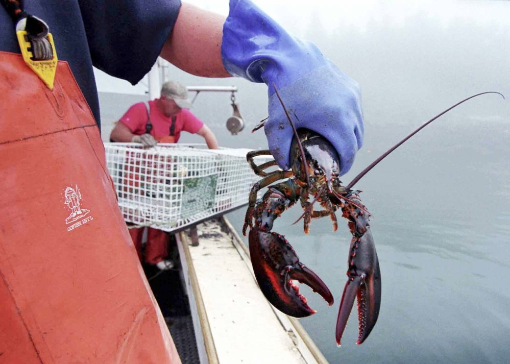 Warmer ocean waters raise the prospect that the shell disease that devastated southern New England's lobster fishery now puts Maine's lobster industry at risk, says a professor of marine science .