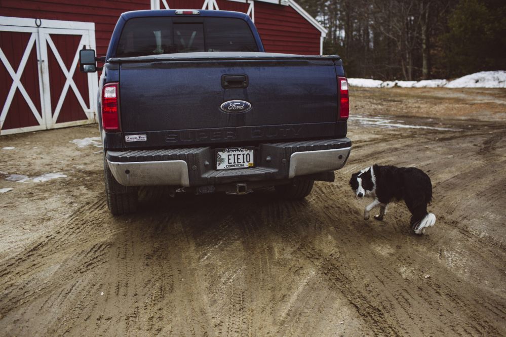 Rick Grant's truck, with an Old McDonald inspired license plate, with their dog Chloe on their farm, Grant's Farm in Saco. Whitney Hayward/Staff Photographer