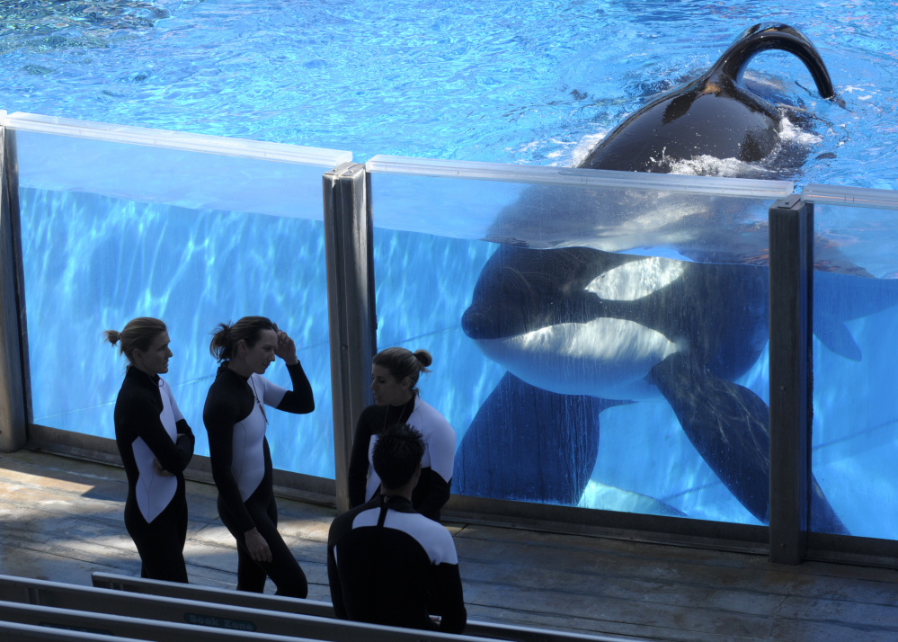 """SeaWorld says it's ending """"the practice in which certain employees posed as animal-welfare activists."""" The company's stock was down 11 percent Thursday."""