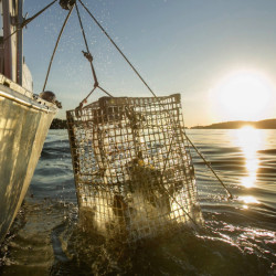 The Maine Marine Patrol has found that at least 200 traps were illegally hauled in an area of the Gulf of Maine known as Jeffreys Ledge.