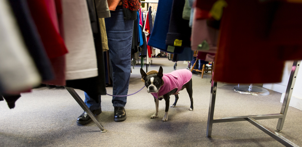Lucy is a regular customer at Good Cause Thrift Shop, according to Lucy's owner, Rose Dumeny.