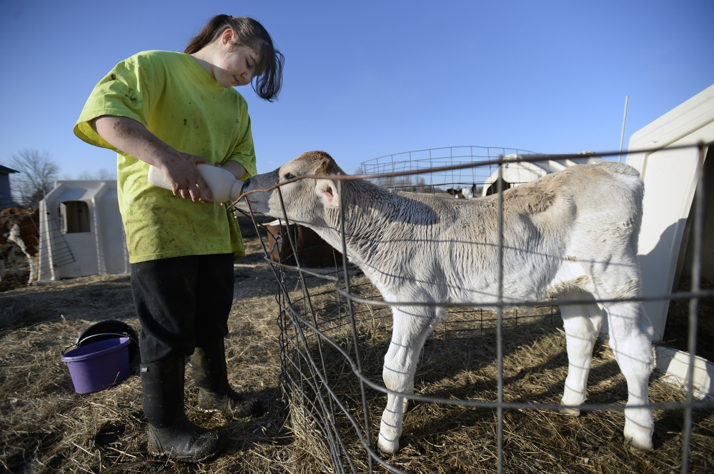 Amber Hunter 15, feeds fresh milk to a calf at Suzie Q Dairy in Unity. Shawn Patrick Ouellette/Staff Photographer