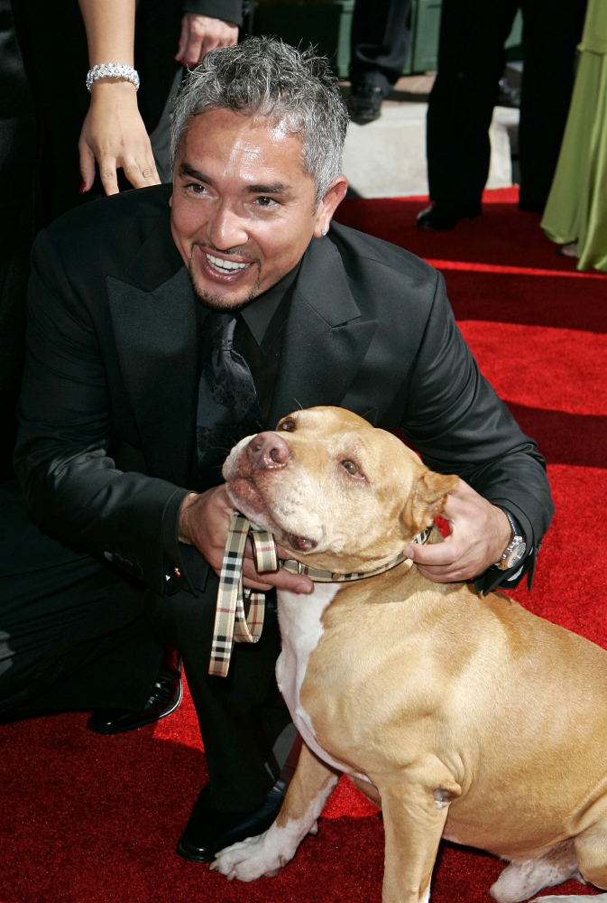 So-called 'Dog Whisperer' Cesar Milan says he'll cooperate with any authorities that may suspect a pig was mistreated on his show.