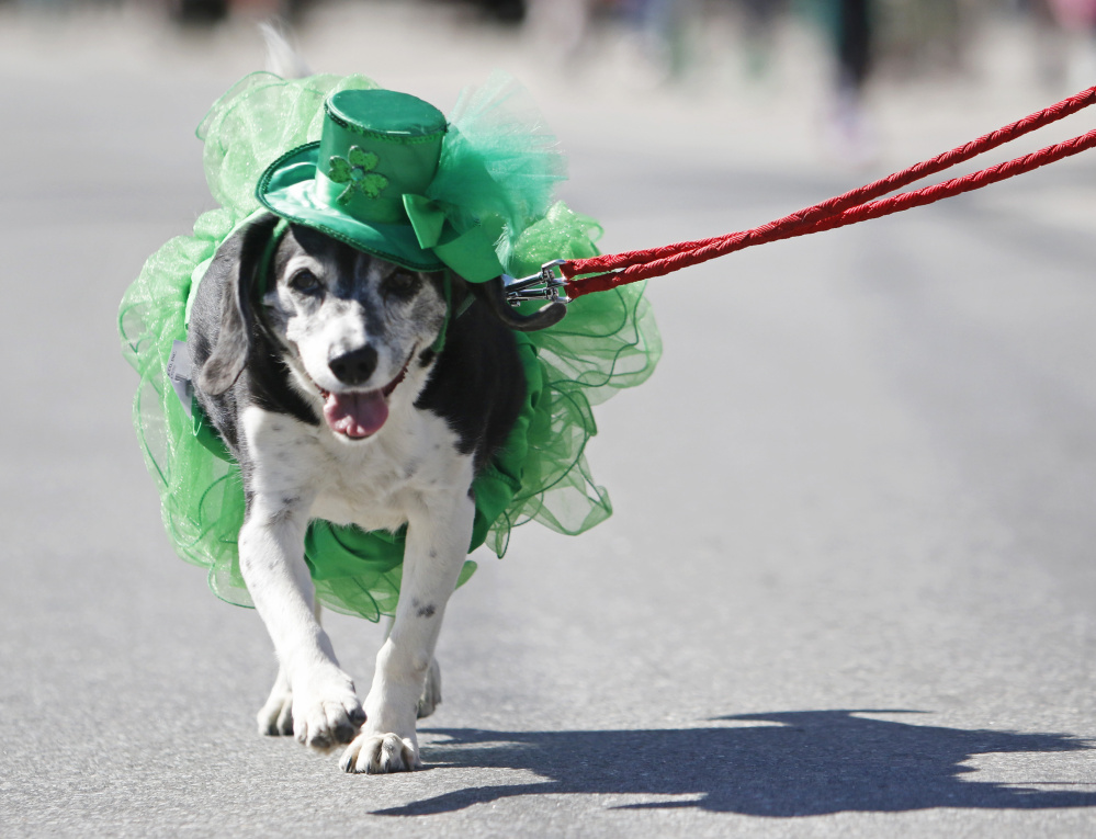 Mona walks in the parade in her St. Patrick's Day garb.