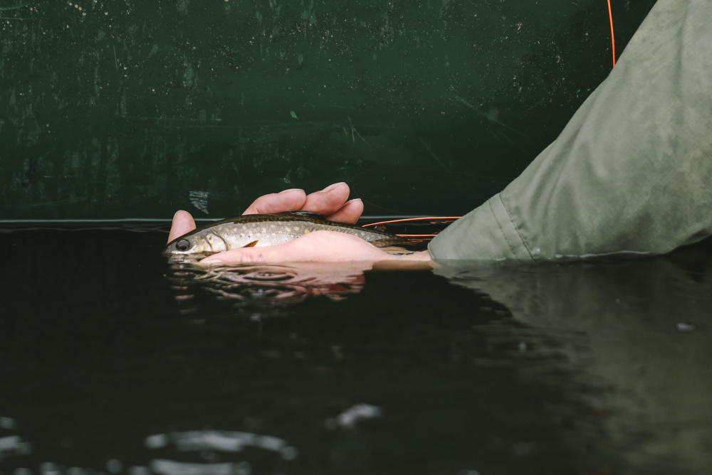 A brook trout is returned to Baker Mountain Pond after being caught in Greenville. Maine is the last stronghold in the Northeast for wild brook trout.