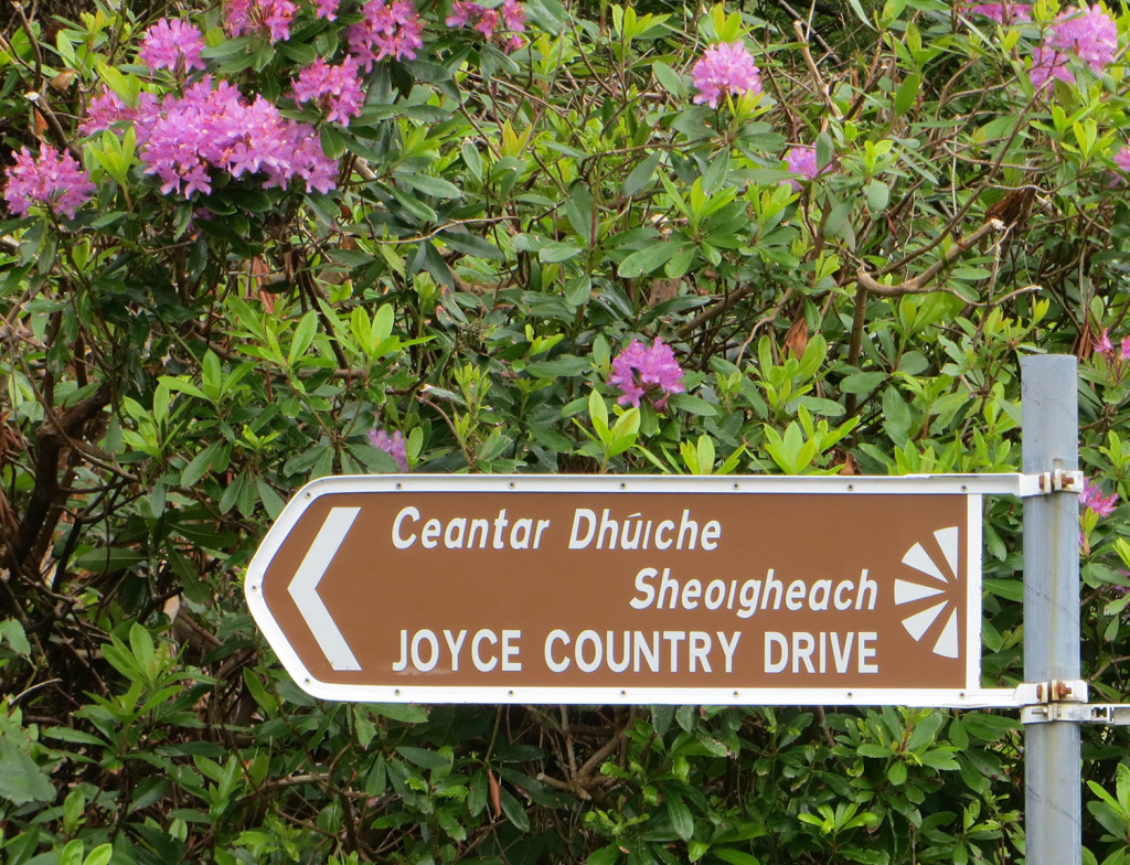 DNA testing proved that Deb Sullivan Gellerson of Gray is a member of the Joyce family, which is so prevalent in County Galway, Ireland, that a large region is called Joyce Country.