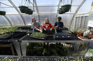 Acadia Calderwood, 15, Emily Martel, 12, and Mitiku Yeatts, 12, work in the greenhouse at the Islesboro Central School.