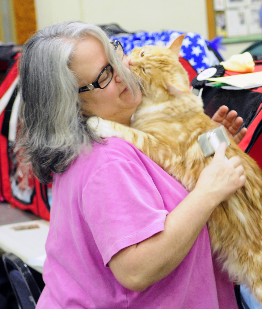 Gisele Duplessis tries to brush her polydactyl Maine Coon cat Triton while he licks her face as she prepares for judging during the cat show on Friday at the Augusta State Armory.