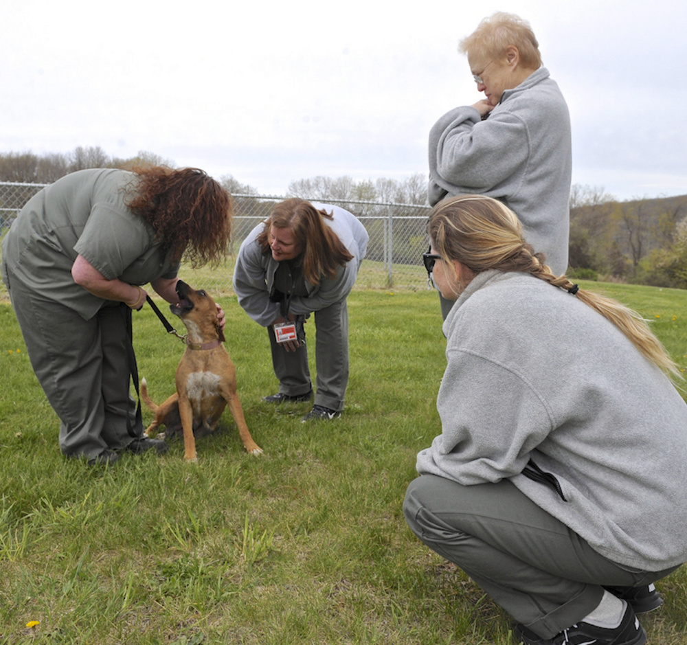 Kerry Seaman, left, Joan Baranek, Janis Woods and Margaret Karas welcome a shelter dog, Omma, to the Federal Correctional Institute, in Danbury, Conn.