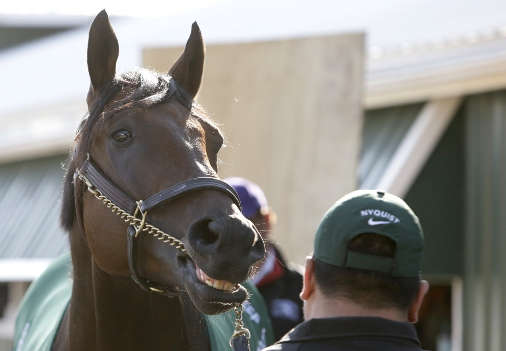 Kentucky Derby winner Nyquist, seen outside a barn at Baltimore's Pimlico Race Course on Friday, is looking for a win in the second leg of the Triple Crown on Saturday.